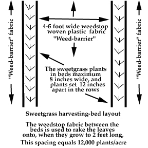 Sweetgrass bed